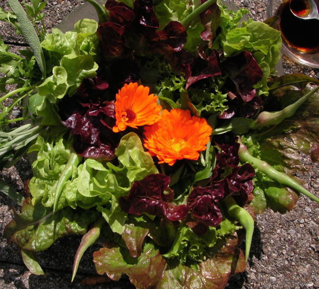Mineralstoffe im Salat