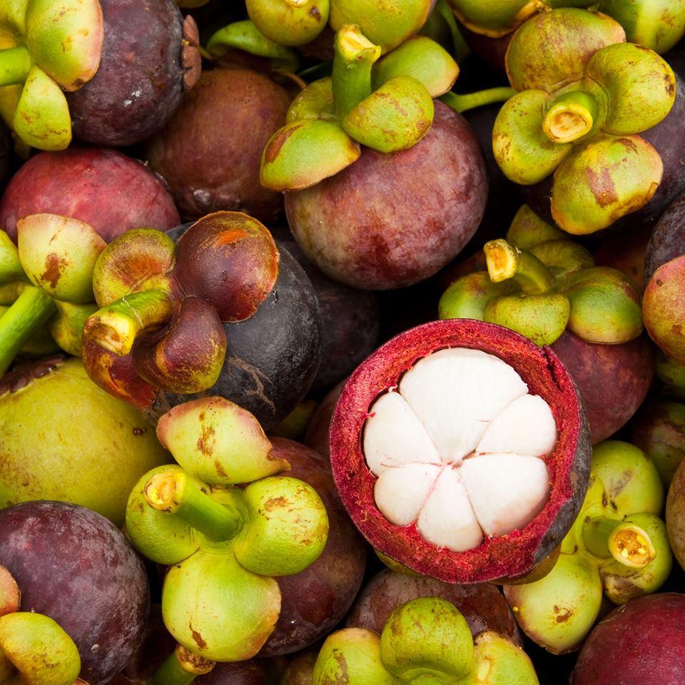 Die Mangostan – die Königin der Früchte
