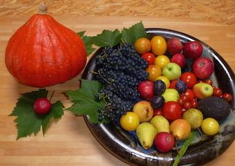Antioxidantien – freie Radikale