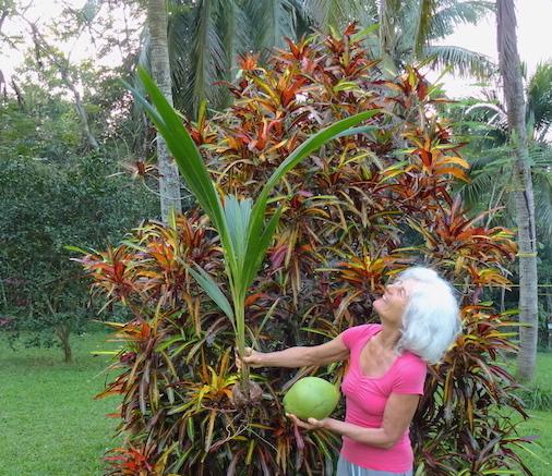 Kokospalme - Gedanken