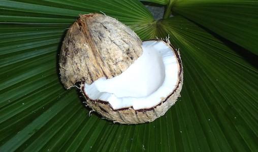 Knack die Kokosnuss