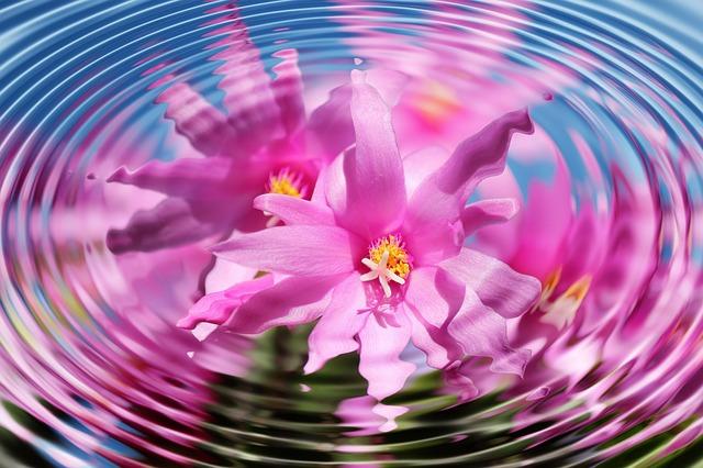 Blüte-Wasserkreis