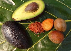 Der Avocadokern – Naturheilapotheke auf kleinstem Raum